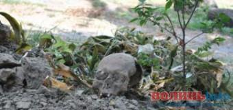 На Волині знайшли людський череп біля ювелірного магазину