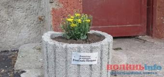 У Луцьку кандидат вирішив рекламуватись на… клумбах