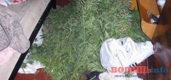 У 17-річного волинянина знайшли майже два кілограми марихуани