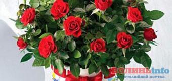 Вітаємо Польчук Іванну Сергіївну з Днем народження!