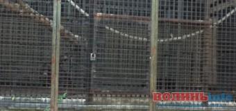 У Луцький зоопарк поселили 20-річного Льончика. ФОТО
