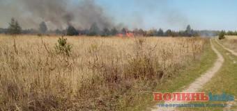 Під Луцьком грибники спалили кілька гектарів лісу. ФОТО