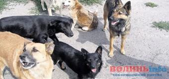 У Ковелі будуть стерилізувати безпритульних псів