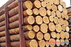 На Волині митники завадили незаконному вивезенню лісу