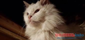 7-кілограмовий білий кіт завітає в Луцьк на презентацію різдвяної історії