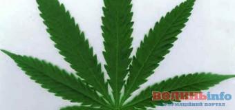 У волинянина знайшли марихуану