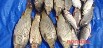 На Волині невідомі викрали майже півцентнера риби