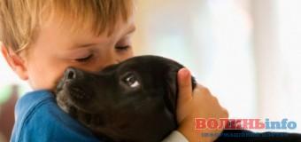 Лучан вчитимуть співіснувати з домашніми тваринами