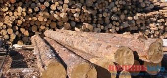 На Волині накрали лісу на 20 тисяч гривень