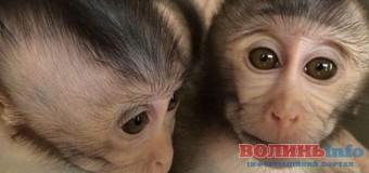 Вчені створили мавп-аутистів