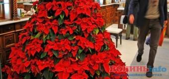 Найгарніші новорічні та різдвяні рослини