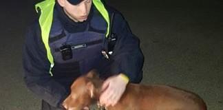У Луцьку поліцейські знайшли вкраденого собаку