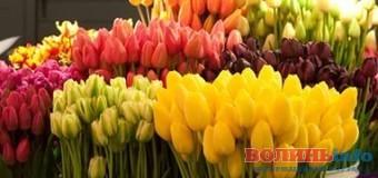 Екологи просять не купувати квіти на 8 березня