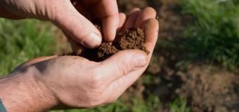 Державі повернули земельні ділянки на Волині вартістю понад 18 мільйонів гривень