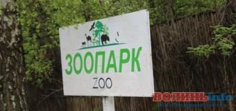 До нищення Луцького зоопарку докладають рук… збоченці?