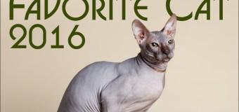 У Луцьку буде ексклюзивна виставка котів