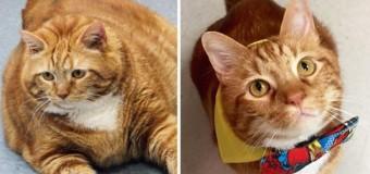 У США кіт схуднув на 9 кілограмів через виснажливі тренування