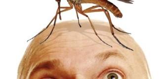 Як захиститись від комарів