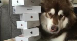 У Китаї син мільярдера подарував собаці вісім айфонів