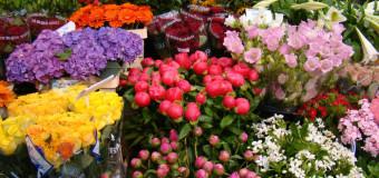 Луцькі торговці квітами хочуть знати, що з ними буде