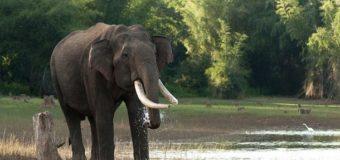 У Непалі стадо слонів атакувало село, є жертви