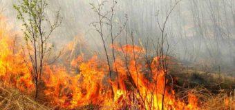 Волинян штрафуватимуть за спалювання трави