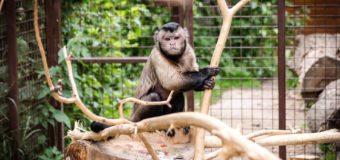 У Луцькому зоопарку – поповнення. ФОТО