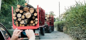 Руслана Лижичко закликала Президента підписати закон про збереження пралісів. ФОТО. ВІДЕО