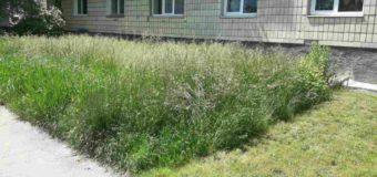 Муніципали перевірили, як косять газони у Луцьку. ФОТО