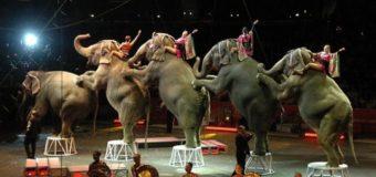 У Латвії заборонили використовувати у цирку диких тварин