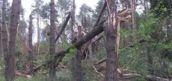 Внаслідок буревію на Волині пошкоджено майже 1500 га лісу. ФОТО та ВІДЕО