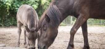 У Луцькому зоопарку кличуть на прогулянку з поні