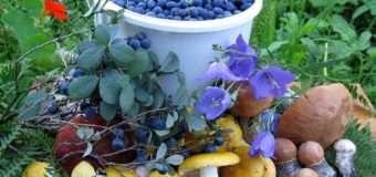 На Волині хочуть оподаткувати доходи від продажу дикоростучих плодів і ягід