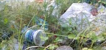Волинські лісівники намагаються вберегти ліс від сміття