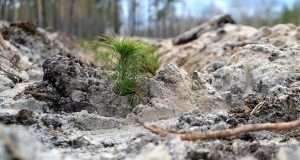 За перше півріччя в Україні відновлено 44,5 тисяч гектарів лісу