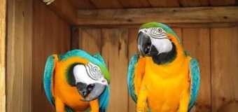 У Луцькому зоопарку з'явились нові неймовірно симпатичні мешканці. ФОТО