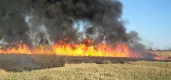 На Волині за добу вогнеборці загасили п'ять пожеж