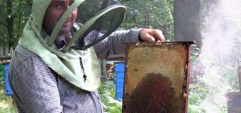 На одному із лісництв Волині уже кілька десятків років знаходиться три пасіки. ФОТО