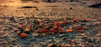 На шальках терезів бурштинового питання – чи не увесь лісовий ресурс Волині