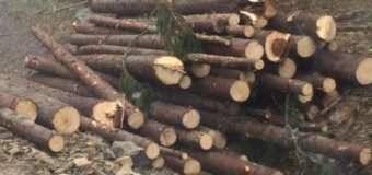 У 2017 році на Прикарпатті незаконно зрубали лісу на 6,1 мільйон гривень