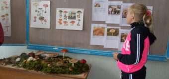 На Волині проводять «грибні уроки» у школах