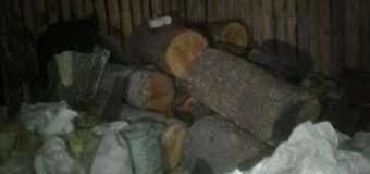 На Волині виявили крадіжку дубів. ФОТО