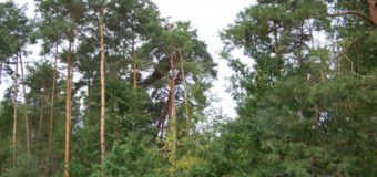 ОТГ на Волині стурбована вирубуванням колгоспних лісів і просить їх у свою власність