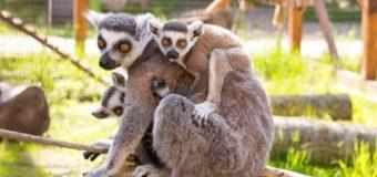 Луцькому зоопарку потрібна додаткова площа