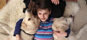 У Луцьку лікуватимуть собаками