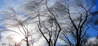 Волинян попереджають про пориви вітру