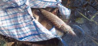 За місяць Волинський рибоохоронний патруль зафіксував 45 порушень