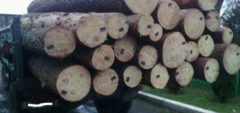 На Волині затримали вантажівку з деревиною невідомого походження