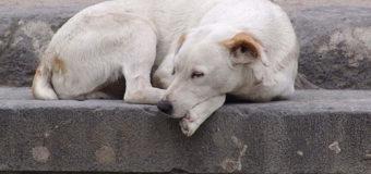Член виконкому: «Кількість безпритульних собак у Луцьку не зменшується»