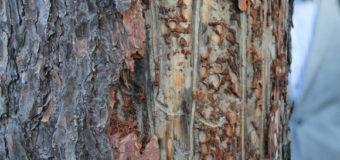 Проблему знищення волинського лісу винесли на розгляд вищих органів влади